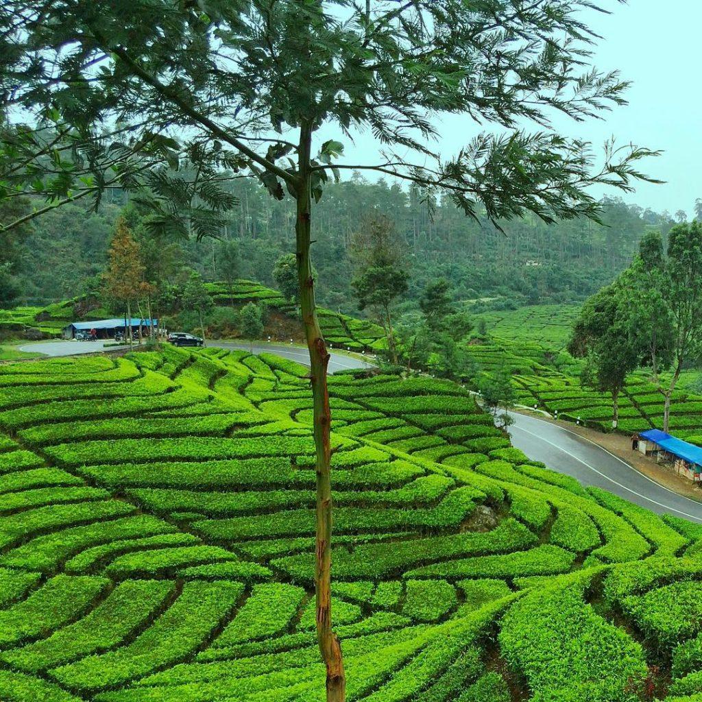 Tempat Wisata Di Ciwidey Bandung